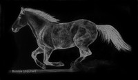 Galloping Horse- digitally reversed pencil drawing by Bonnie Gruenberg