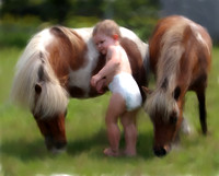 Toddler and mini horses (this child was delivered by Bonnie)